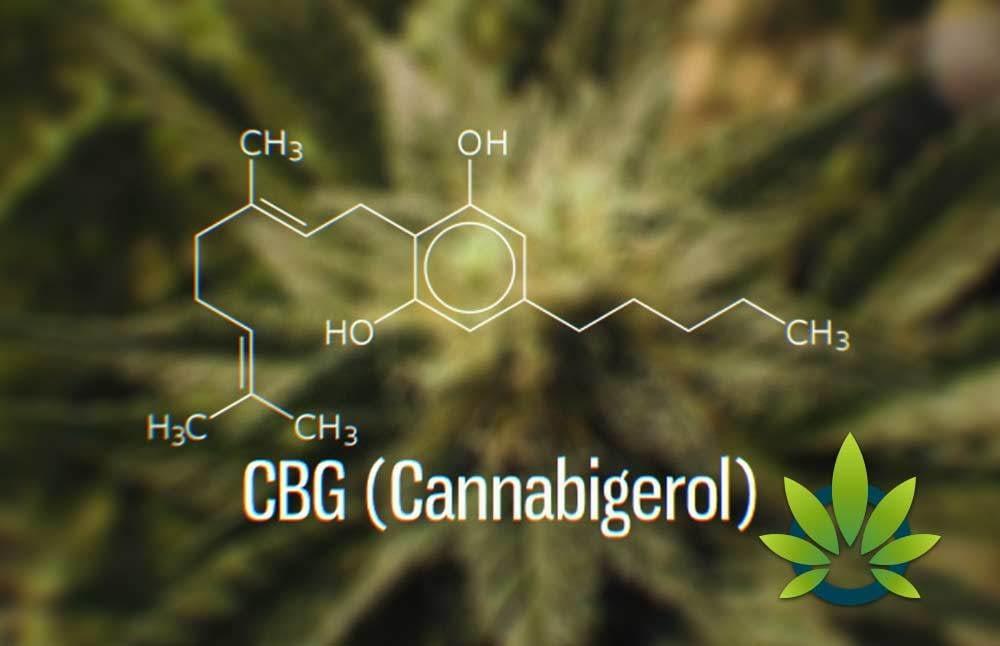 CBG – Kannabigerol