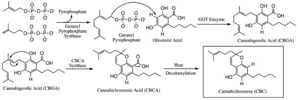 CBC wzór chemiczny i biosynteza kannabichromenu