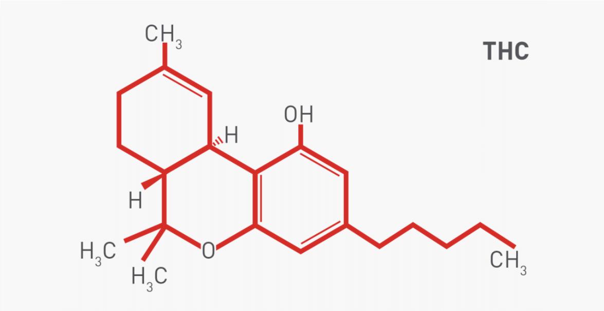 THC – Tetrahydrokannabinol