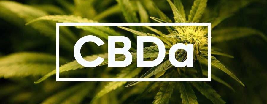 CBDA – Kwas Kannabidiolowy